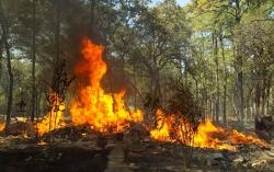 """Incendi, Coldiretti Abruzzo: """"Almeno 15 anni per ricostruire i boschi perduti"""""""