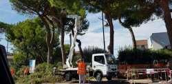 Emergenza pini a Pescara, perché Italia Nostra protesta