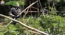 Lanciano. Un campo di marijuana in mezzo alla natura