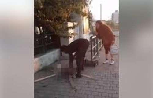 Livorno. Orrore per strada: immigrato uccide e arrostisce un gatto