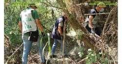 Piantagione di marijuana da 200mila euro lungo il Salinello
