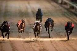 Le corse dei cani di domenica: ecco le quote dei bookmakers!