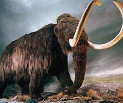 Il clima, gli spray e i mammut· #EasyWriter/Il racconto/Marco La Greca