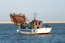 Avere il pescato e non poterlo raccogliere: l'appello delle vongolare d'Abruzzo