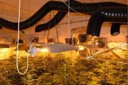 Piantagione di marijuana ad Atri: arrestato 37 di Montesilvano