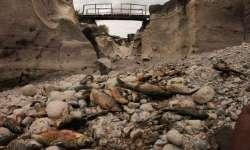 Sicilia. Il fiume Alcantara non c'è più: moria di pesci