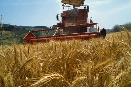 Alanno, al via la 40esima Fiera dell'Agricoltura
