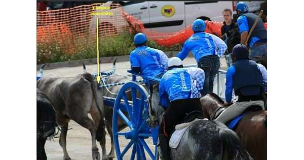 Muore travolto da cavallo, chi protesta per una tragedia assurda?