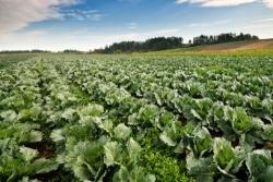 Caldo record, Coldiretti: agricoltura abruzzese a rischio