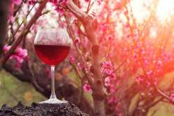 Festa del vino a Primavera: ecco le sorprese della Cantina Lancianese