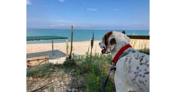 Aperta a Pineto la 'Dog Beach'