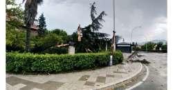Fulmine spezza albero in piazza Sulmona
