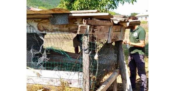 Orsa 'Peppina' torna a visitare i pollai