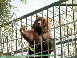 Castel di Sangro, Ministro Ambiente nega licenza e dispone chiusura zoo