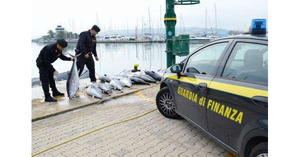 Gdf sequestra 20 tonni 'pinna rossa'