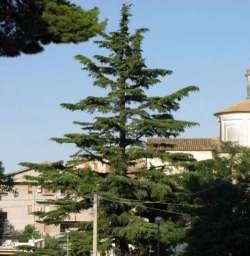 Pianella, ecco l'Albero di Natale più grande d'Abruzzo