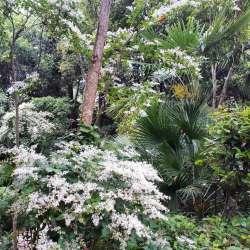 Pasquetta, Caccia al Tesoro Botanico